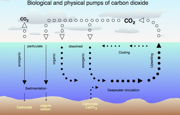 co2 tax life cycle